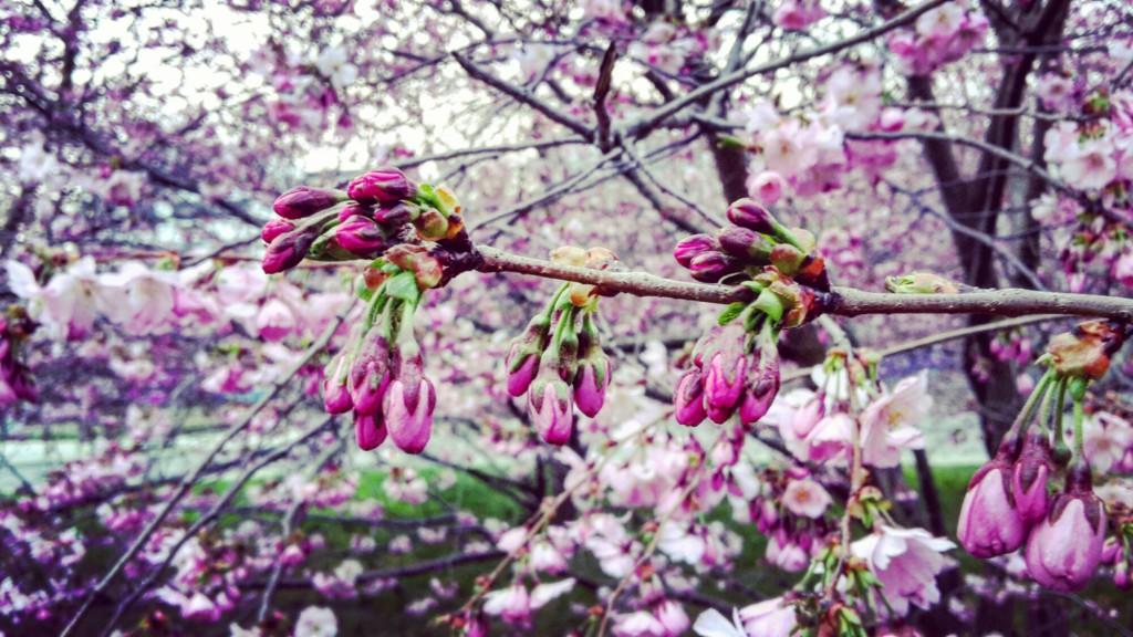Mein April in Erfurt