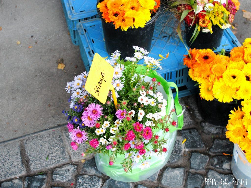 Blumen auf dem Wochenmarkt am Erfurter Domplatz