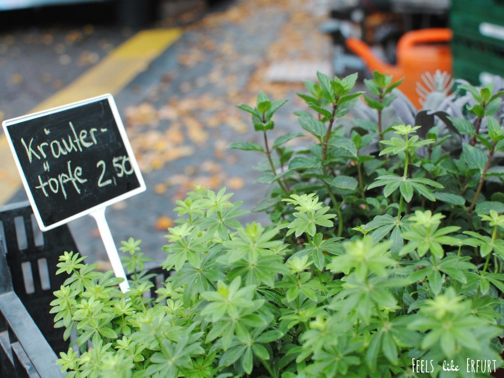 Kräuter auf dem Wochenmarkt Erfurter Domplatz