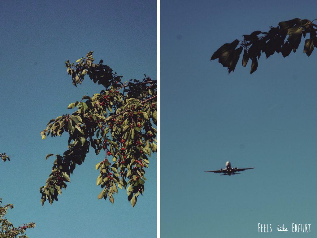 Kirschplantage Schwedenschanze und Flugzeug im Landeanflug zum Flughafen Erfurt