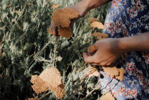 Hand die Blumen hält