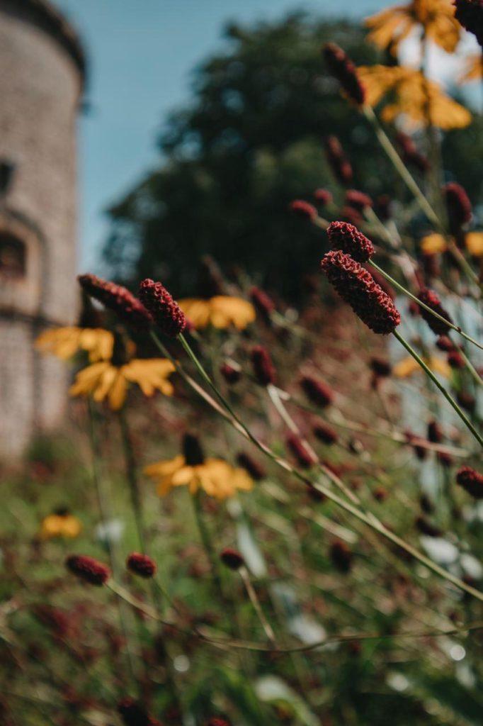 Blumenstadt, Ein Tag in der grünen Blumenstadt Erfurt