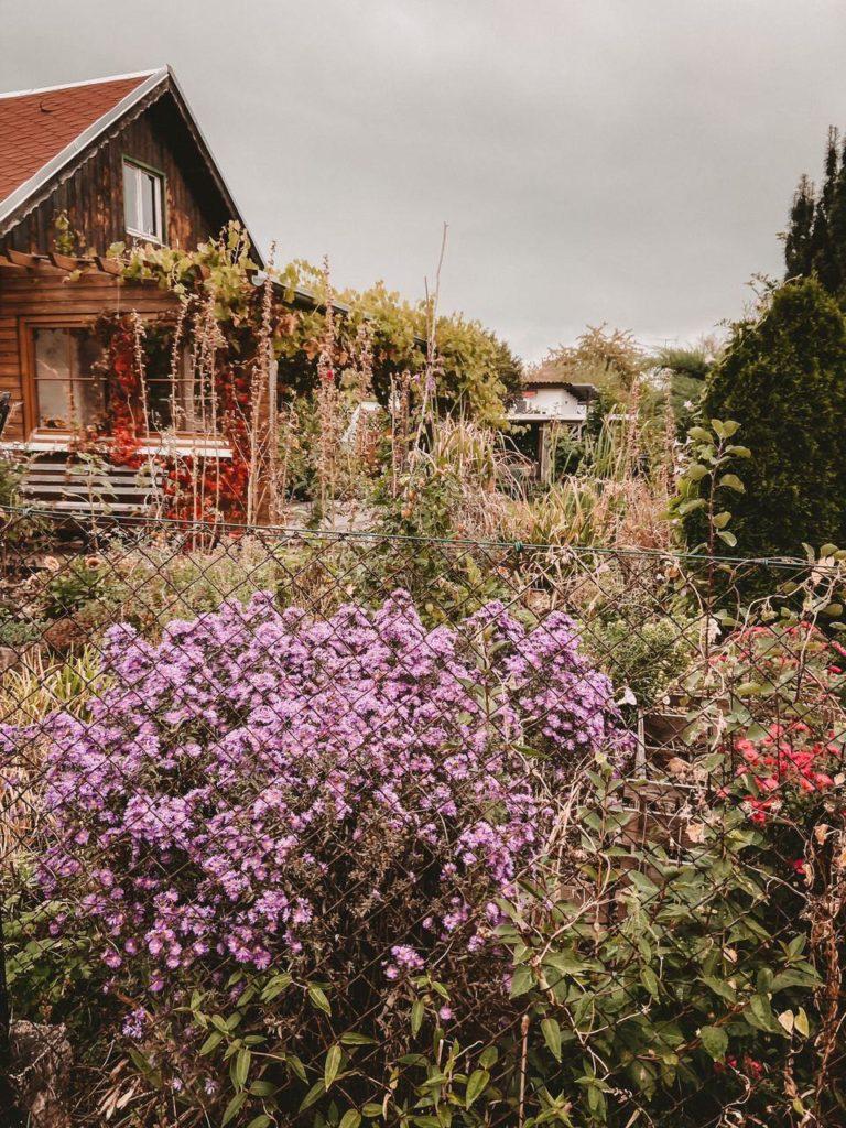 Schrebergartensiedlung und Blumen