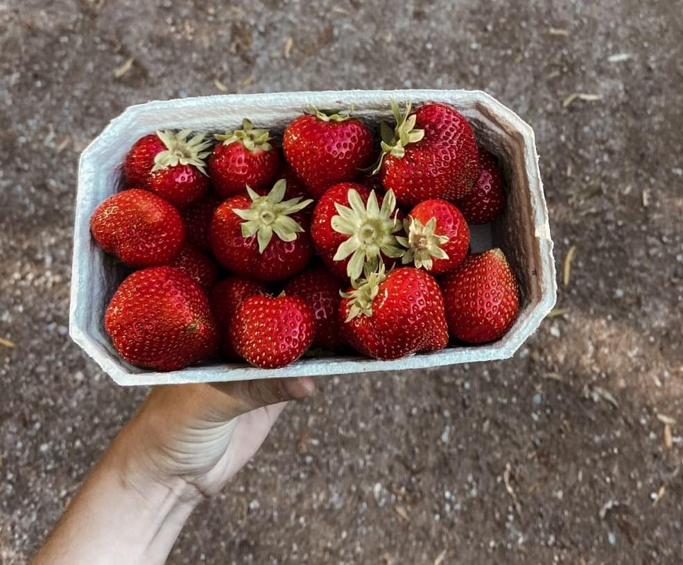 Hofladen Erfurt Erdbeeren